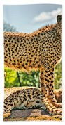 Three Cheetahs Beach Towel