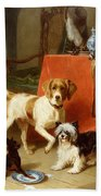 Three Dogs Beach Sheet