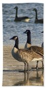 Three Geese Beach Towel