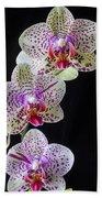 Three Orchids Beach Towel