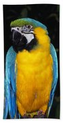 Three Parrots Beach Towel