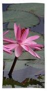 Three Sweet Pink Water Lilies Beach Towel
