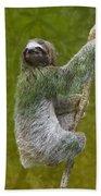 Three-toed Sloth Climbing Beach Towel by Heiko Koehrer-Wagner