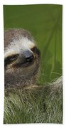 Three-toed Sloth Beach Towel by Heiko Koehrer-Wagner