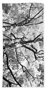 Three Trees Reach For The Sky Black And White Beach Towel