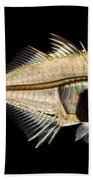 Tibetan Glassfish Beach Towel