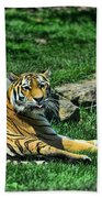 Tiger - Endangered - Lying Down - Tongue Out Beach Towel