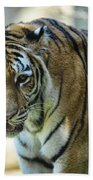 Tiger - Endangered - Wildlife Rescue Beach Towel