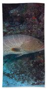 Tiger Grouper Swimming Along The Bottom Beach Towel