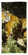 Tiger In The Rough Beach Towel