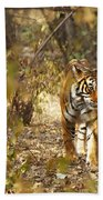 Tiger In The Undergrowth At Ranthambore Beach Towel