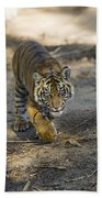 Tiger Panthera Tigris Cub, Native Beach Towel
