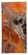 Tiger Shrimp On Orange Sponge, Bali Beach Towel