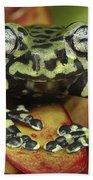 Tigers Treefrog Hyloscirtus Tigrinus Beach Towel