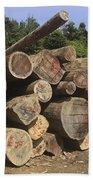 Timber At A Logging Area, Danum Valley Beach Towel