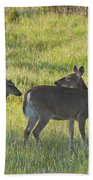 Time To Be On Your Own Son 5981 Beach Towel