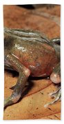 Toad Atelopus Senex On A Leaf Beach Towel