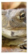 Toad Beach Towel