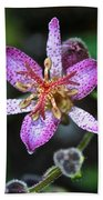 Toad Lily Beach Towel