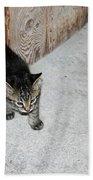 Tough Barn Kitten Beach Towel