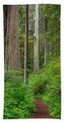 Trail Through Redwoods Beach Towel