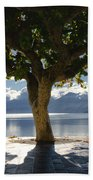 Tree And Benches Beach Towel