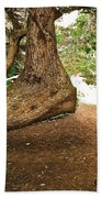 Tree And Trail Beach Towel