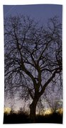 Tree At Night With Stars Trails Beach Towel