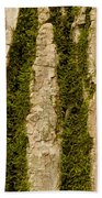 Tree Bark Mossy 4 C Beach Towel