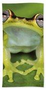 Tree Frog Hyla Rubracyla At Night Beach Towel