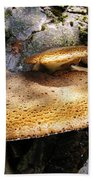 Tree Fungus 1 Beach Towel