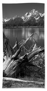 Tree Stump On The Shore Of Lewis Lake At Yellowstone Beach Towel