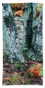 Tree Trio In Lichen At Hawn State Park Beach Towel