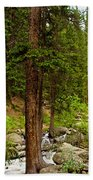 Trees By The Stream Beach Towel