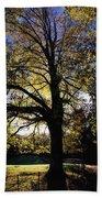 Trees During Autumn Beach Towel