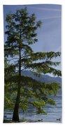 Trees With Sunbeam Beach Towel