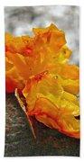 Tremella Mesenterica - Orange Brain Fungus Beach Towel