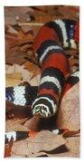 Tricolor Hognose Snake Beach Towel