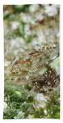Triplefin, Indonesia Beach Towel