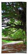 Tropical Banyan Path Beach Towel