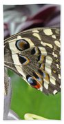 Tropical Butterfly Beach Towel