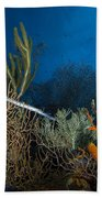 Trumpetfish, Belize Beach Towel