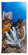 Tube Sponge On Coral Reef In Raja Beach Towel