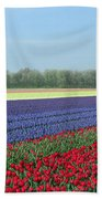 Tulip And Hyacinth Fields In Holland. Panorama Beach Towel