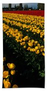 Tulip Fields Forever Beach Towel