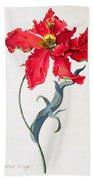 Tulip Perroquet Rouge Beach Sheet