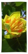 Tulip Poplar Flower Beach Towel