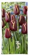 Tulip Tulipa Sp Key West Variety Flowers Beach Towel