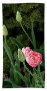 Tulips And Evergreen Beach Towel