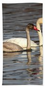 Tundra Swan And Cygnet Beach Towel